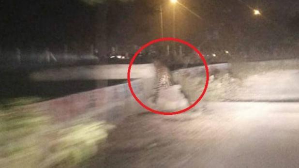 ग्रेटर नोएडा वेस्ट की सड़क पर देखा गया तेंदुआ, लोगों में भय का माहौल